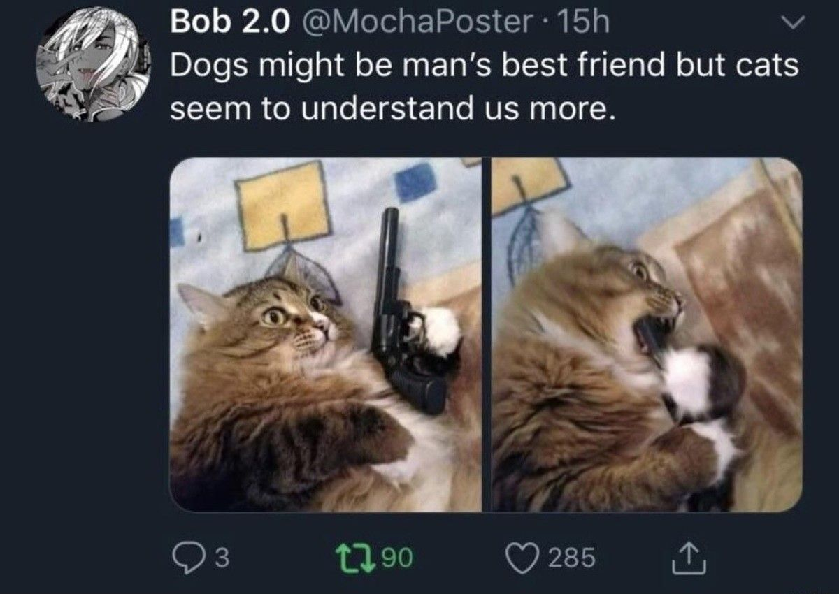The wisest of pets