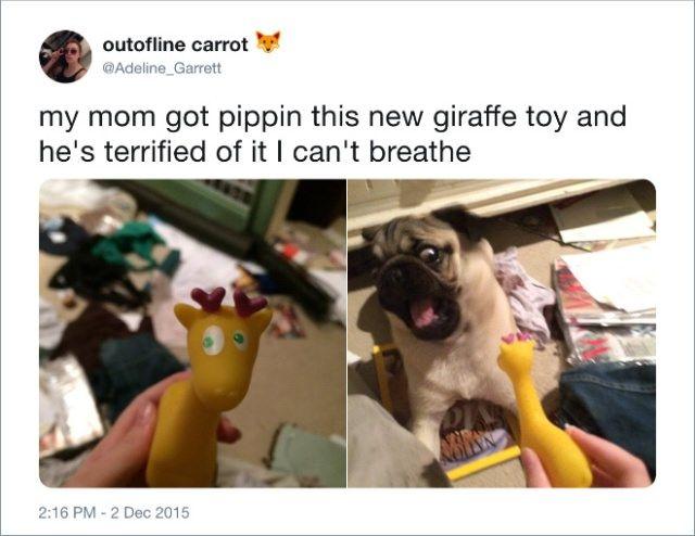 @Adeline_Garrett Tweets About Dogs