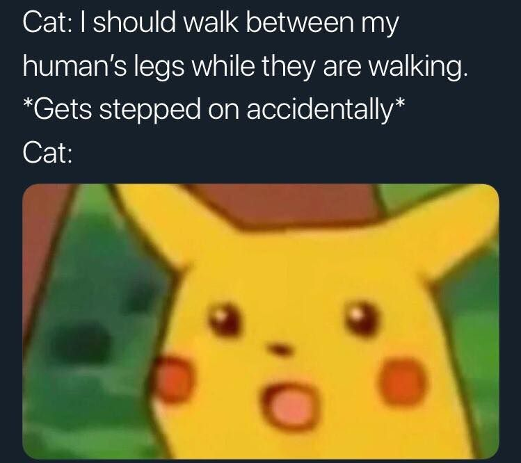 Cats are dumb