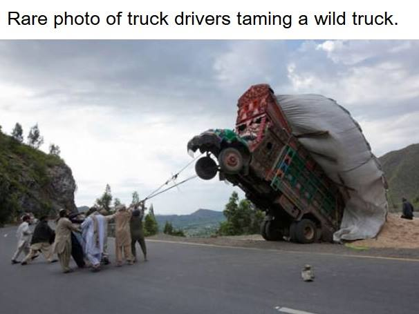 After it's domesticated it gives birth to truck drivers. . .