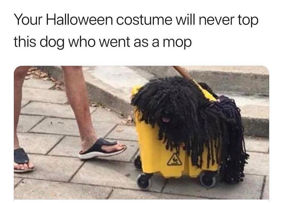 and winner of best pet costume....