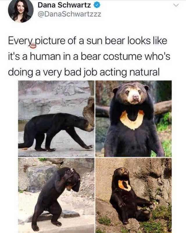 Excuse me, I am a bear.