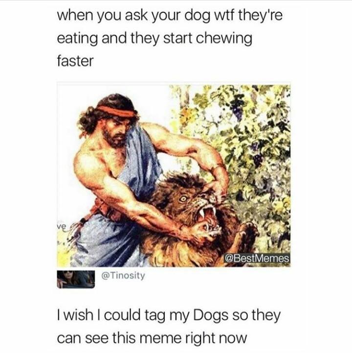 When u ask ur dog !