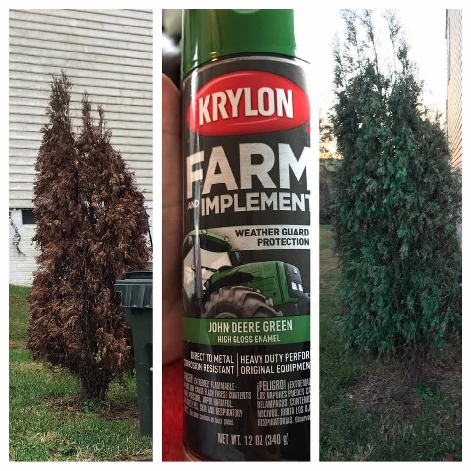 Friend of mine got a complaint from her HOA about a dying shrub on her property