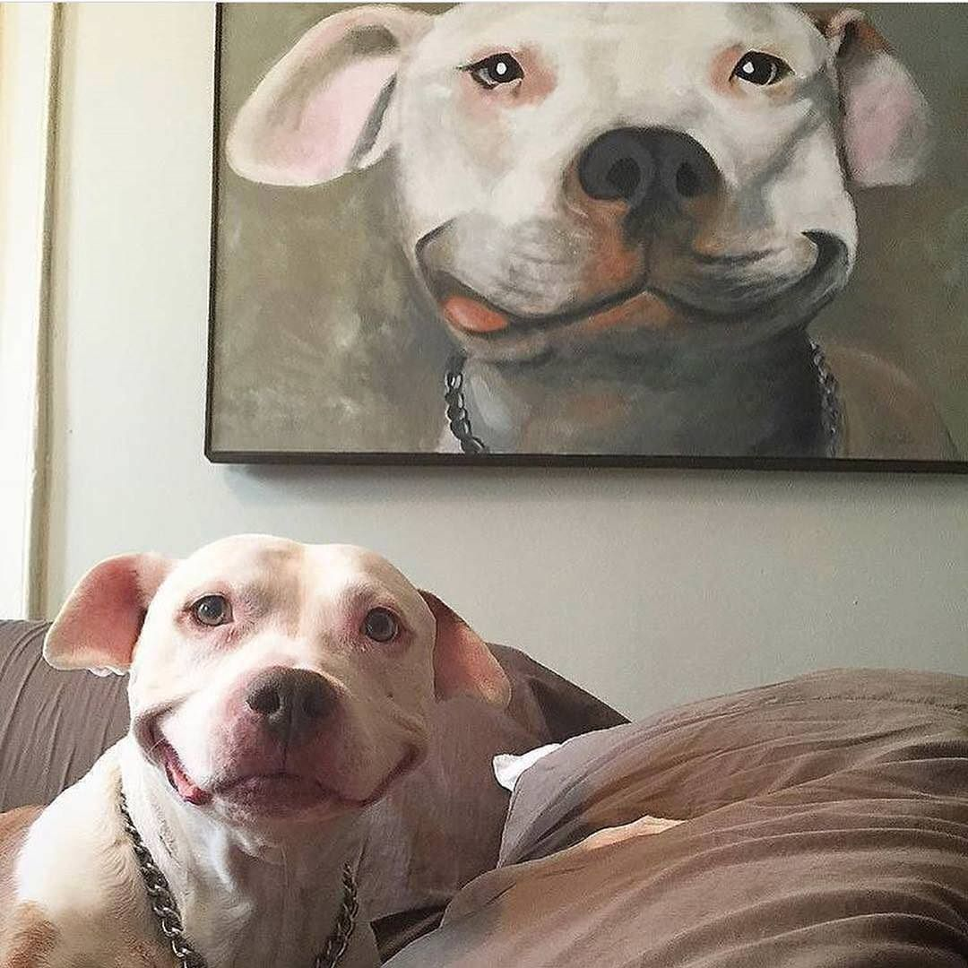 Perfect portrait for a perfect dog