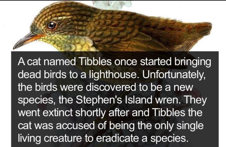 Tibbles