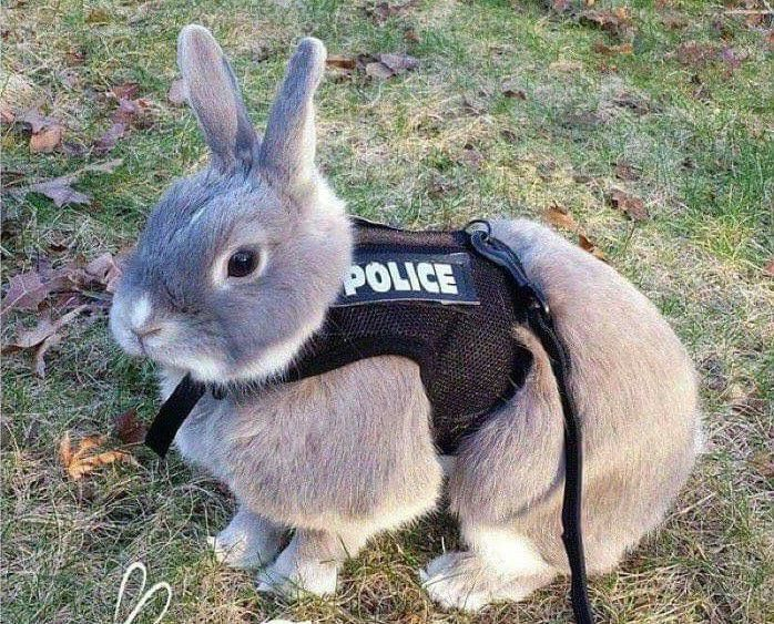 Disney is apparently producing a live action remake of zootopia to