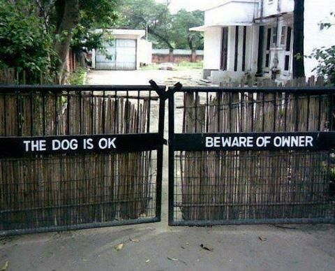 The dog is OK...