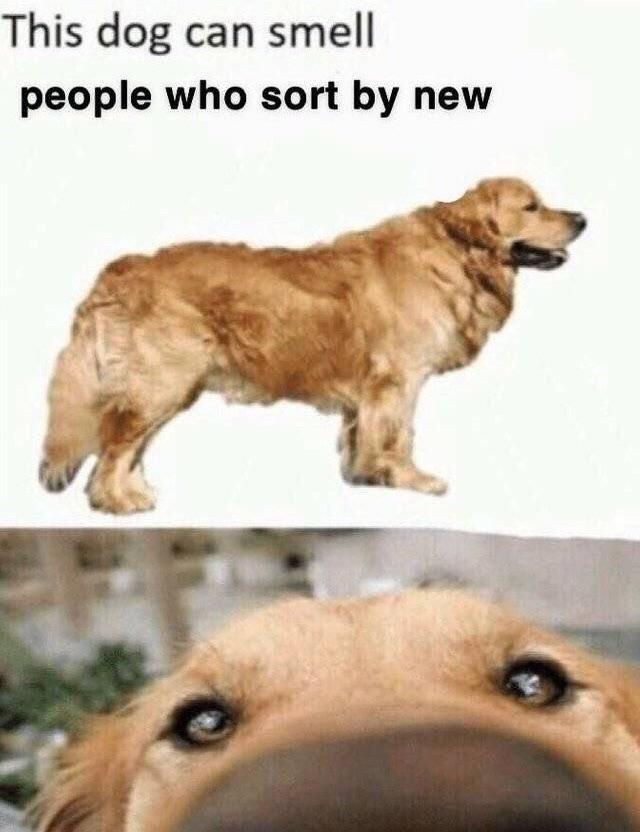 Sniff sniffs