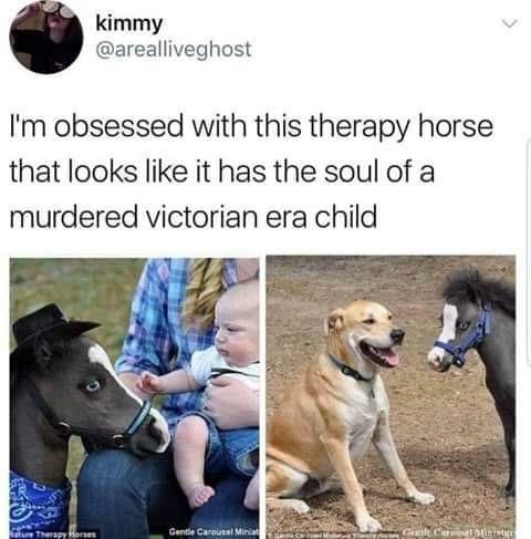 Bobo the angsty horse