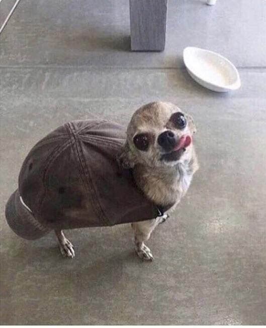 The rare Mexican Desert Turtle.