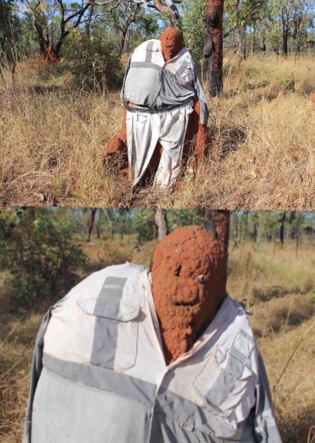 Australians putting clothes on termite mounds