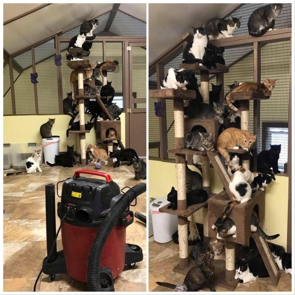 Vacuuming at an animal shelter