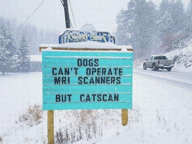 Dogs v Cats