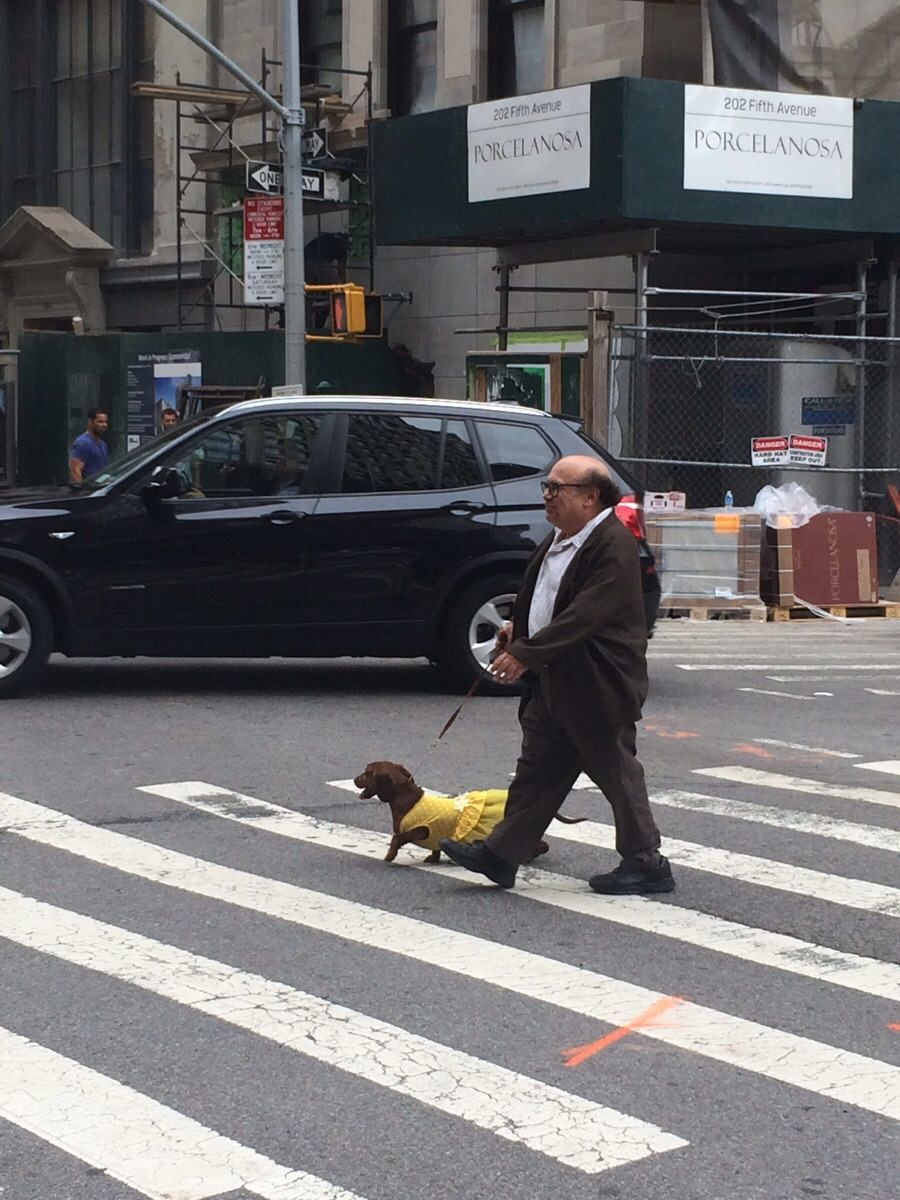 Danny DeVito walking his dog