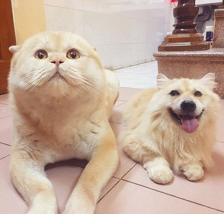 Faceswap gone right