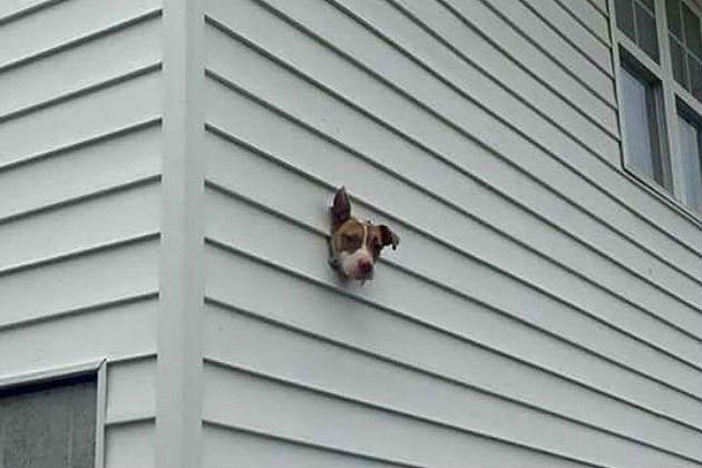 "Googled ""dryer vent"" and this is what popped up"