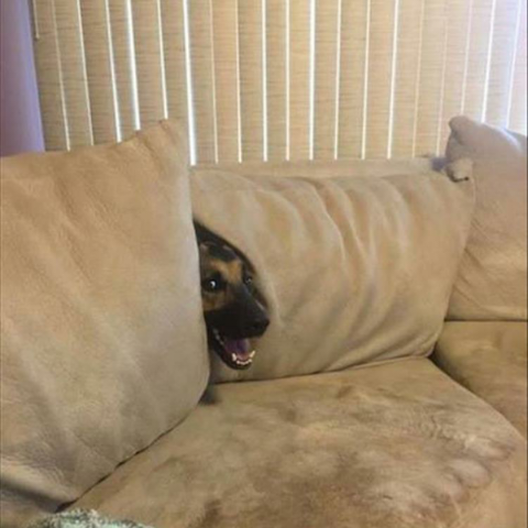 My dog is terrible at hide and seek
