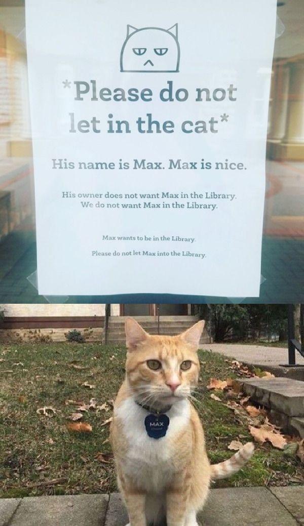 Sad Max