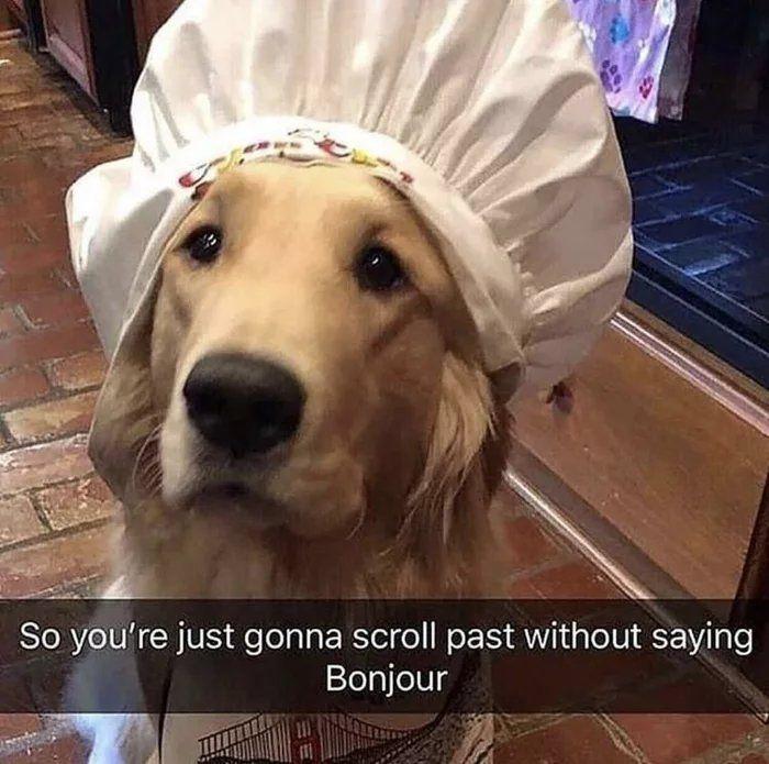 Bonjur