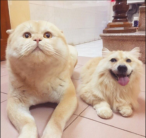 A face swapped cat and dog