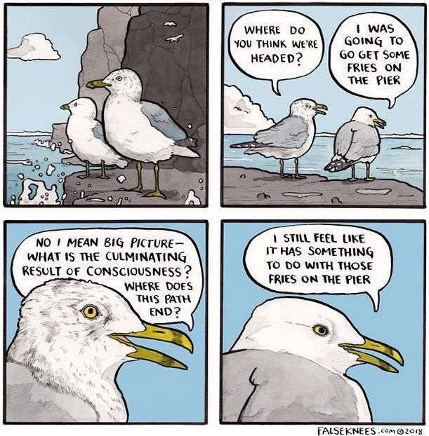 This gull gets it.