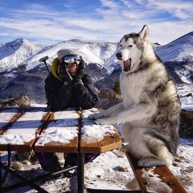 """...So then I said, """"Retriever? I don't even know her!"""""""