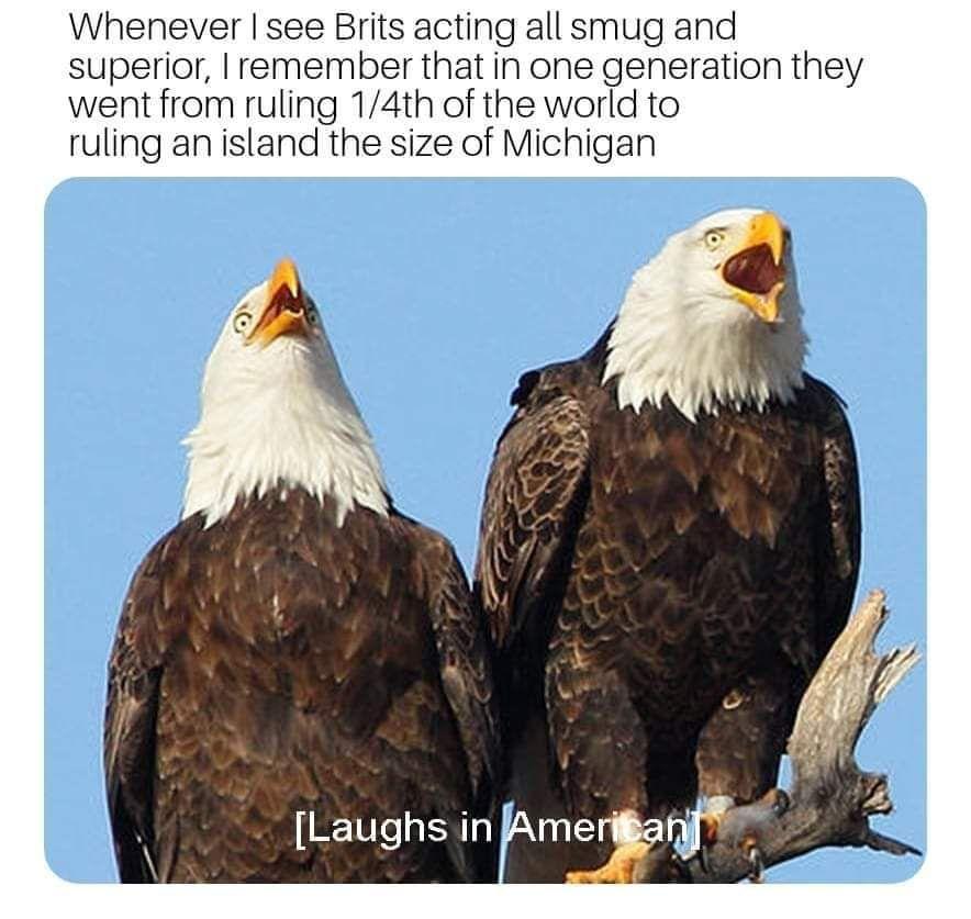 F****n brits