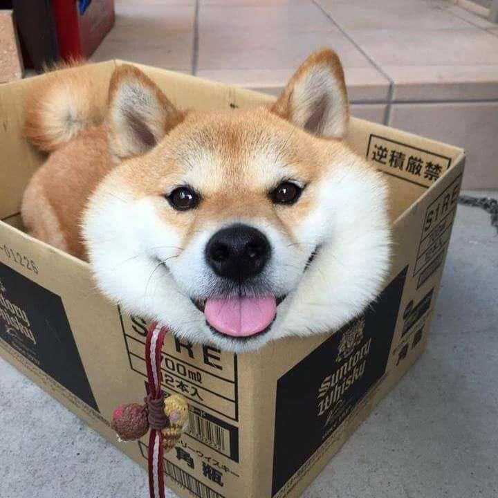 Someone ordered a box of dog?