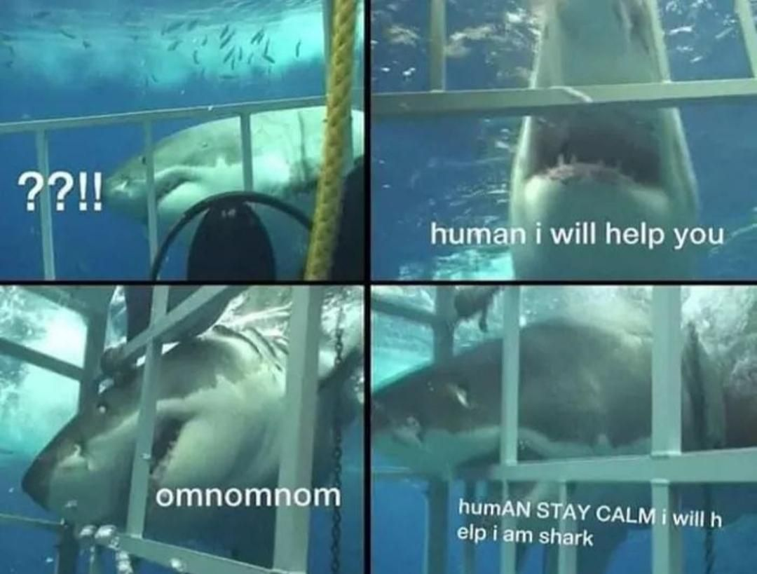Sharks are good people