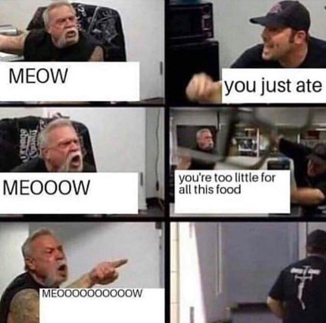 MEOOOOOW