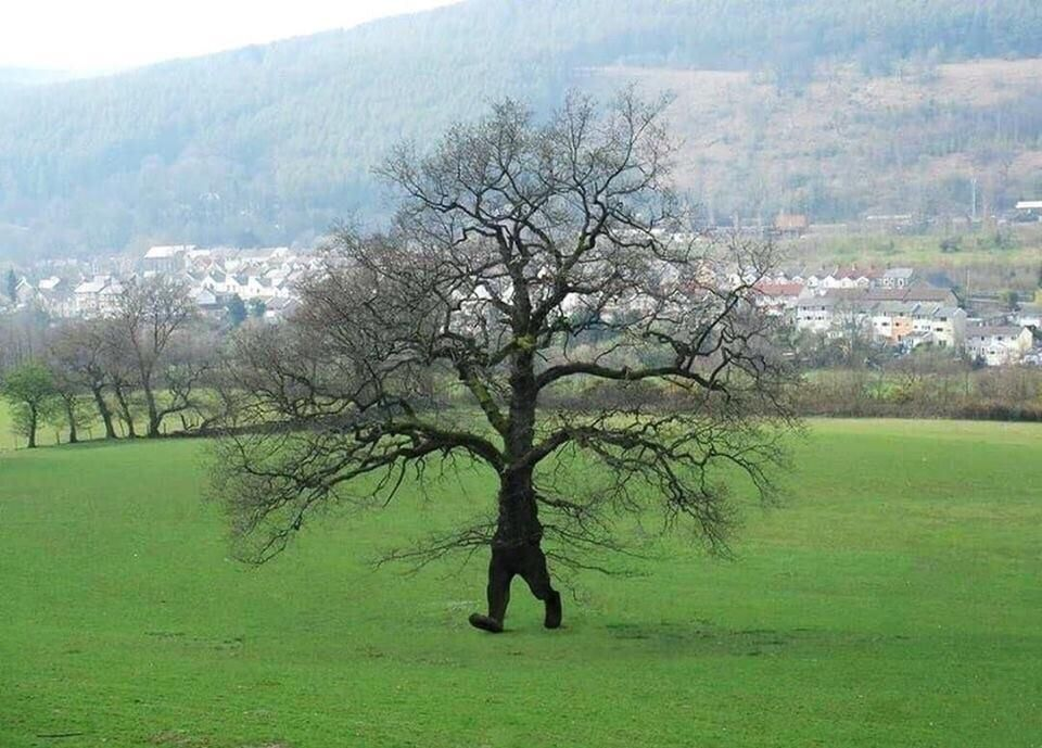 I hate it when ents show up at a picnic