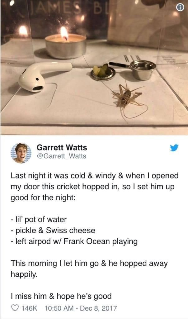 Live well, sweet cricket