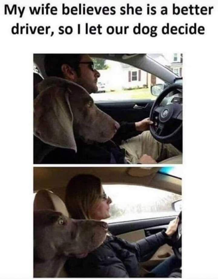 Let the dog decide.....