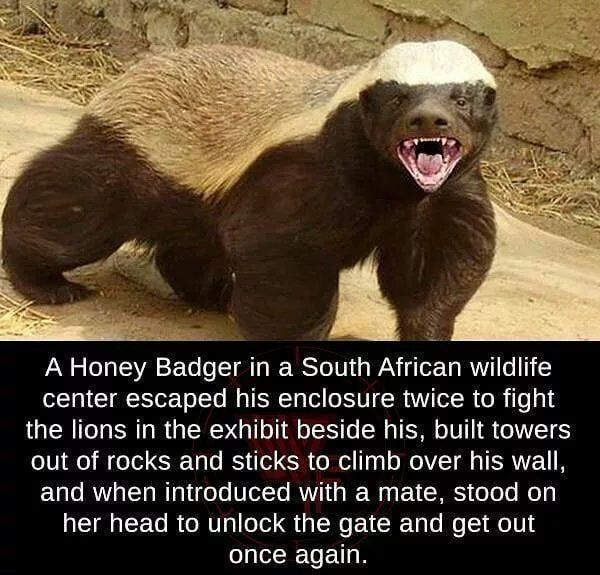 Honeybadger doesn't care. Honeybadger doesn't give a shit.