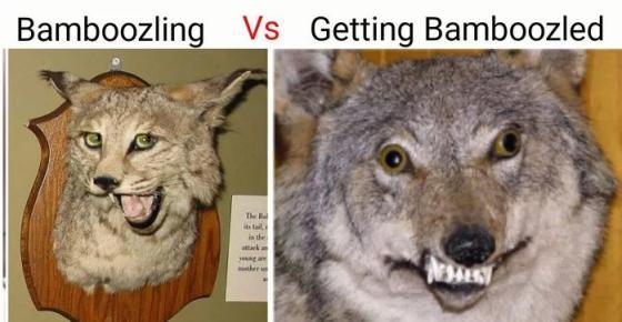 bamboozling