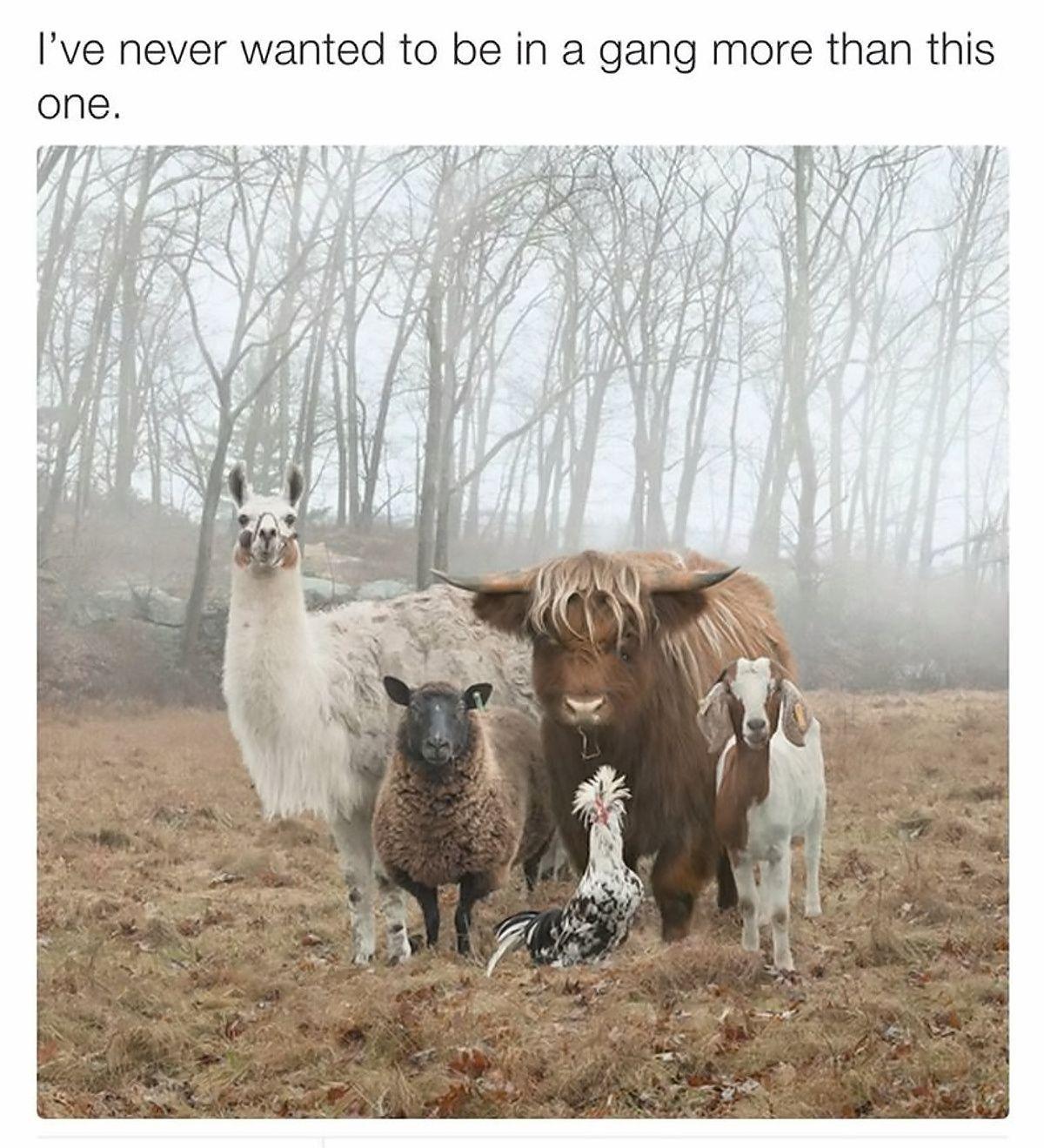 Name this gang