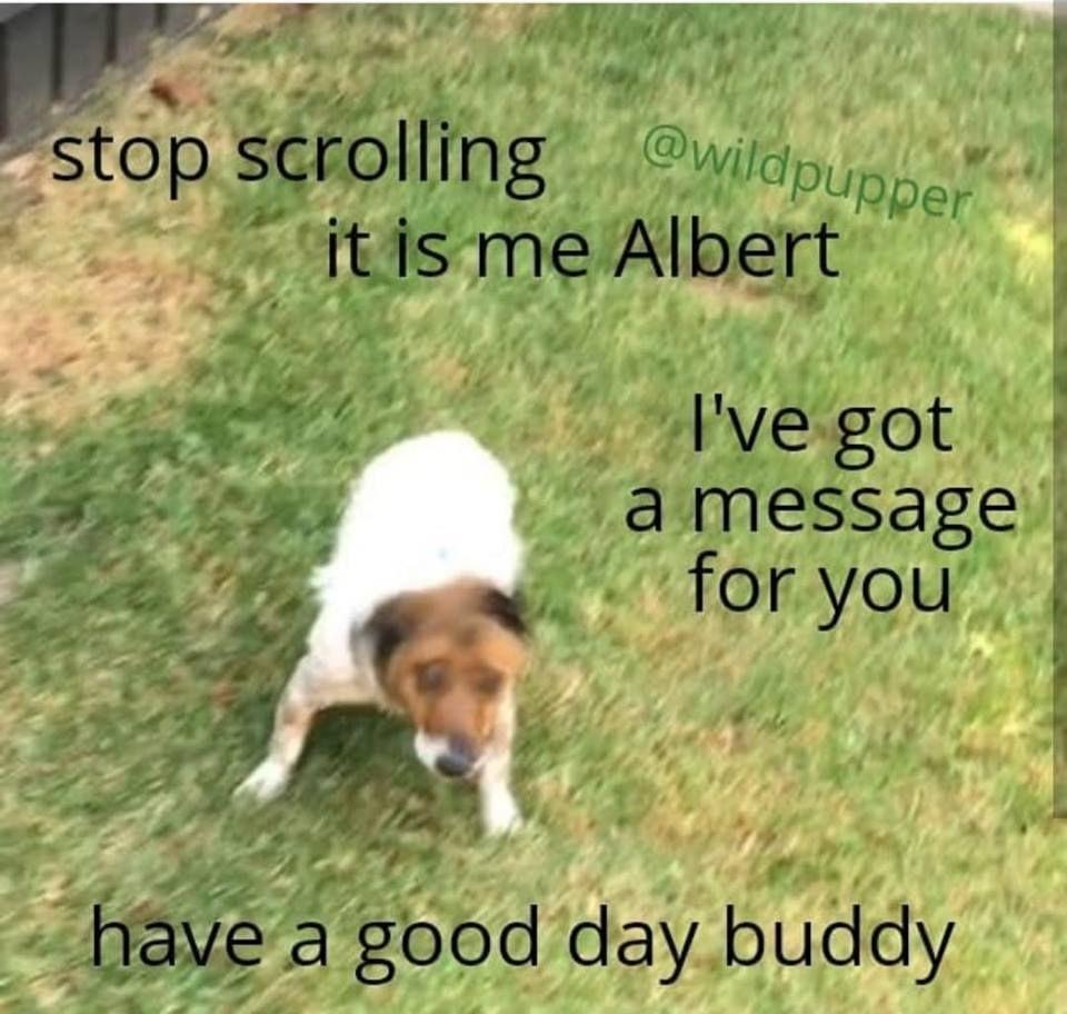 Carl sent a messenger for you