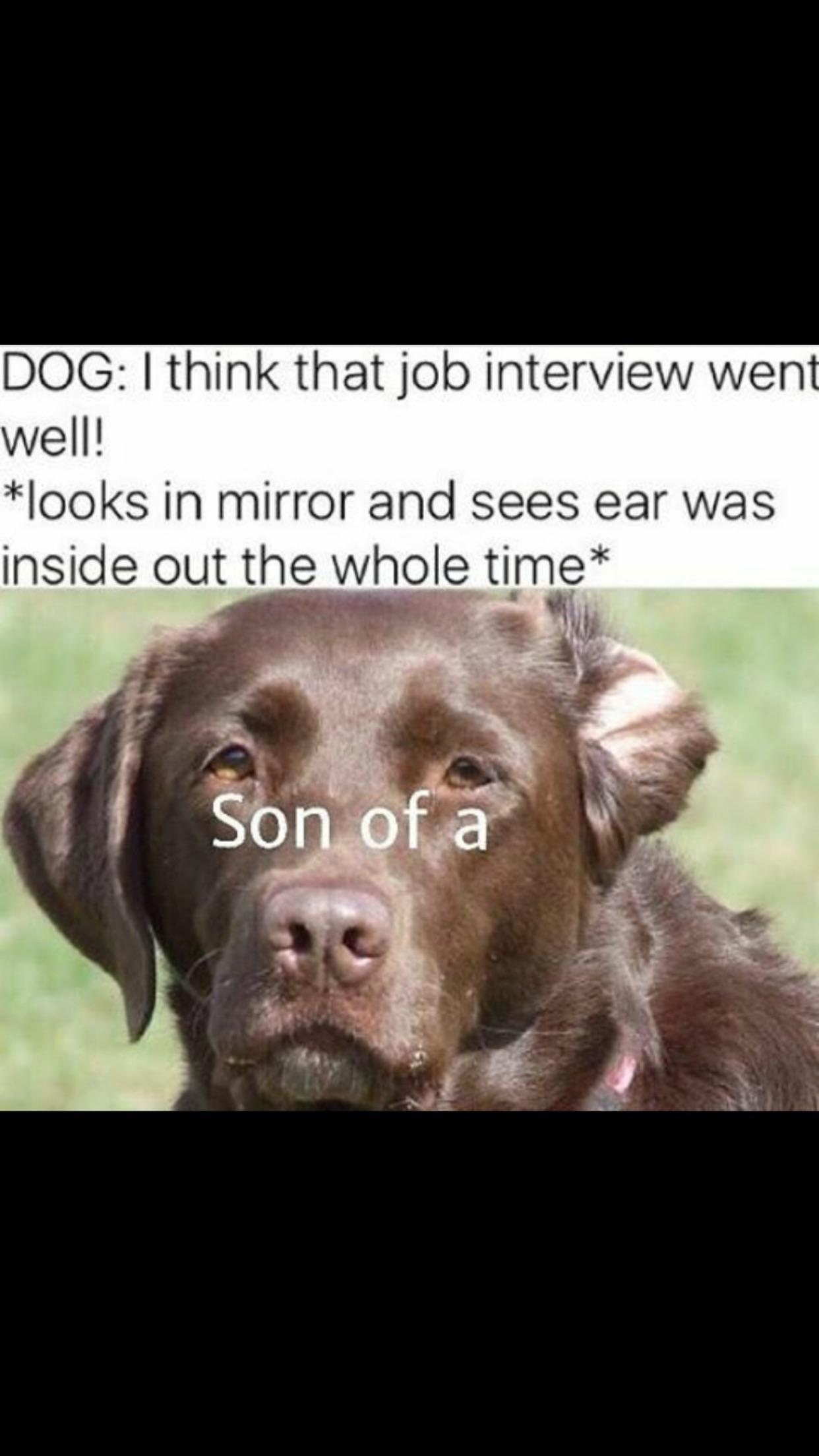 Poor doggo probably didn't get the job