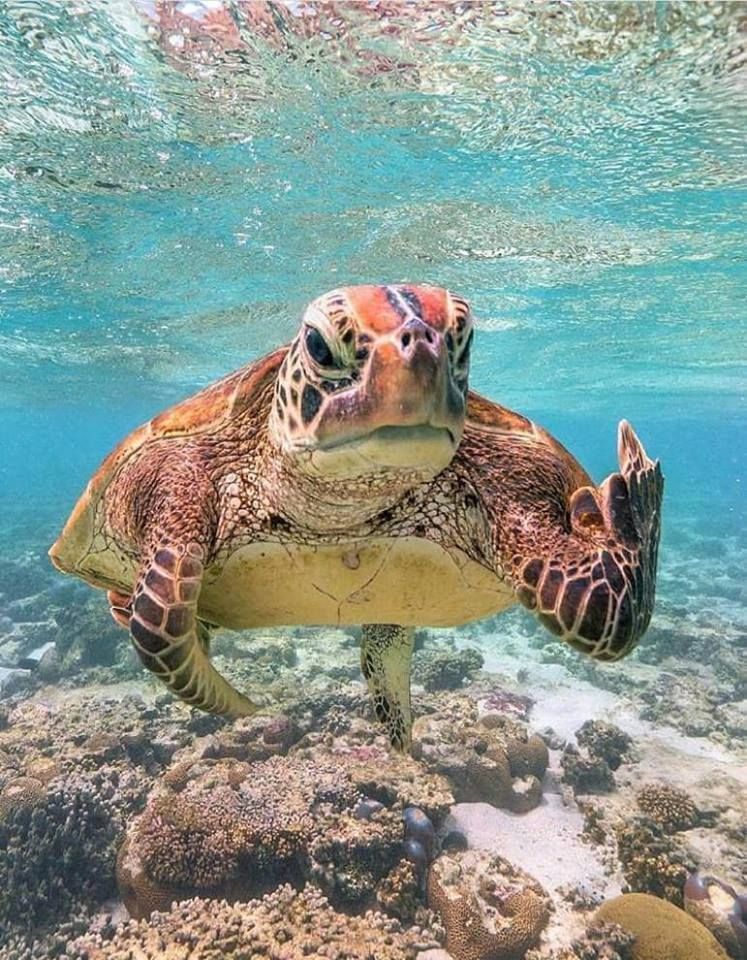 Not everyday you see a sea turtle with an attitude....