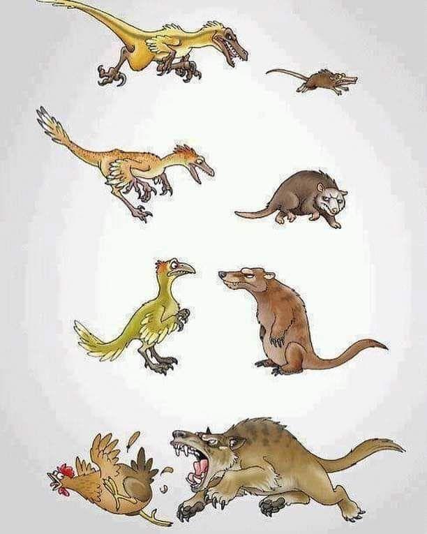 evolution karma