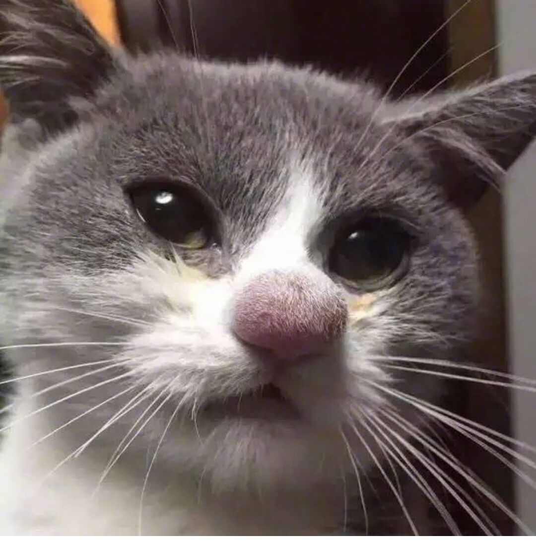 Cat who got his nose stung by a bee