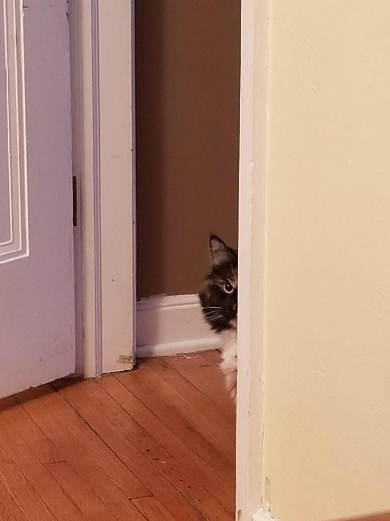 I didn't believe my husband when he texted and said the cat was acting suspiciously.