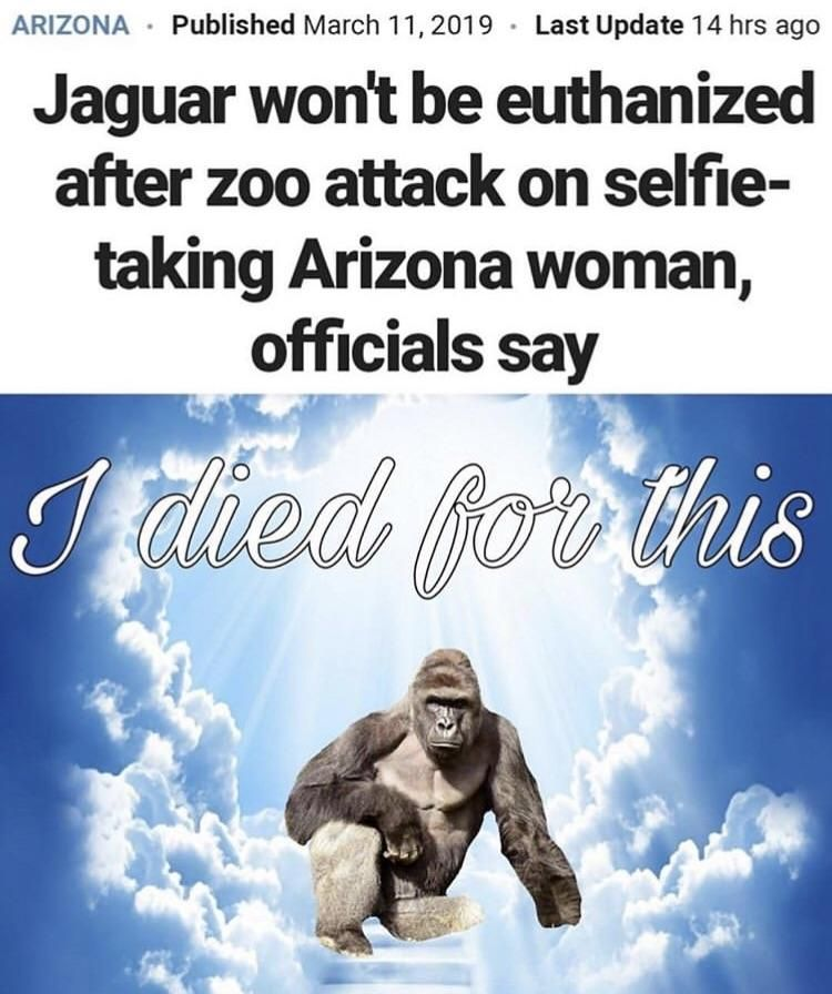 Harambe the martyr