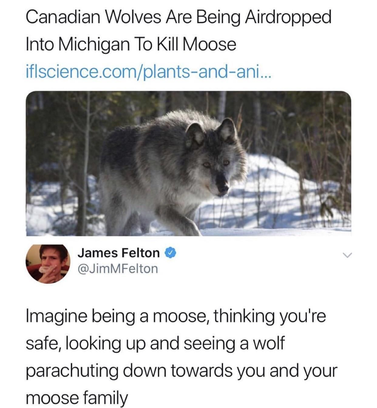 BAM! Wolf dropped on your family