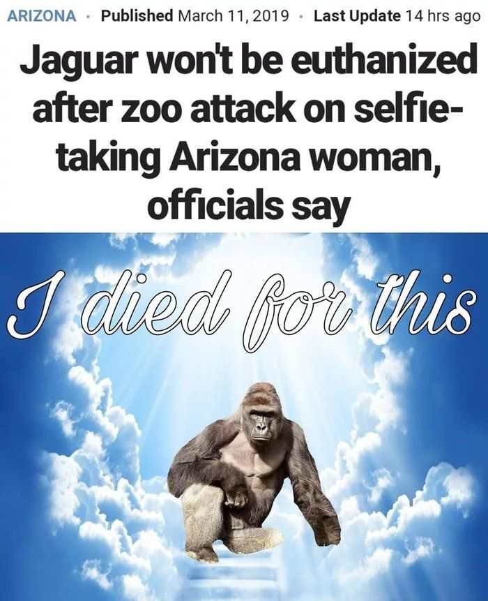 We gotta take a minute to thank this unit of a gorilla for all he has done