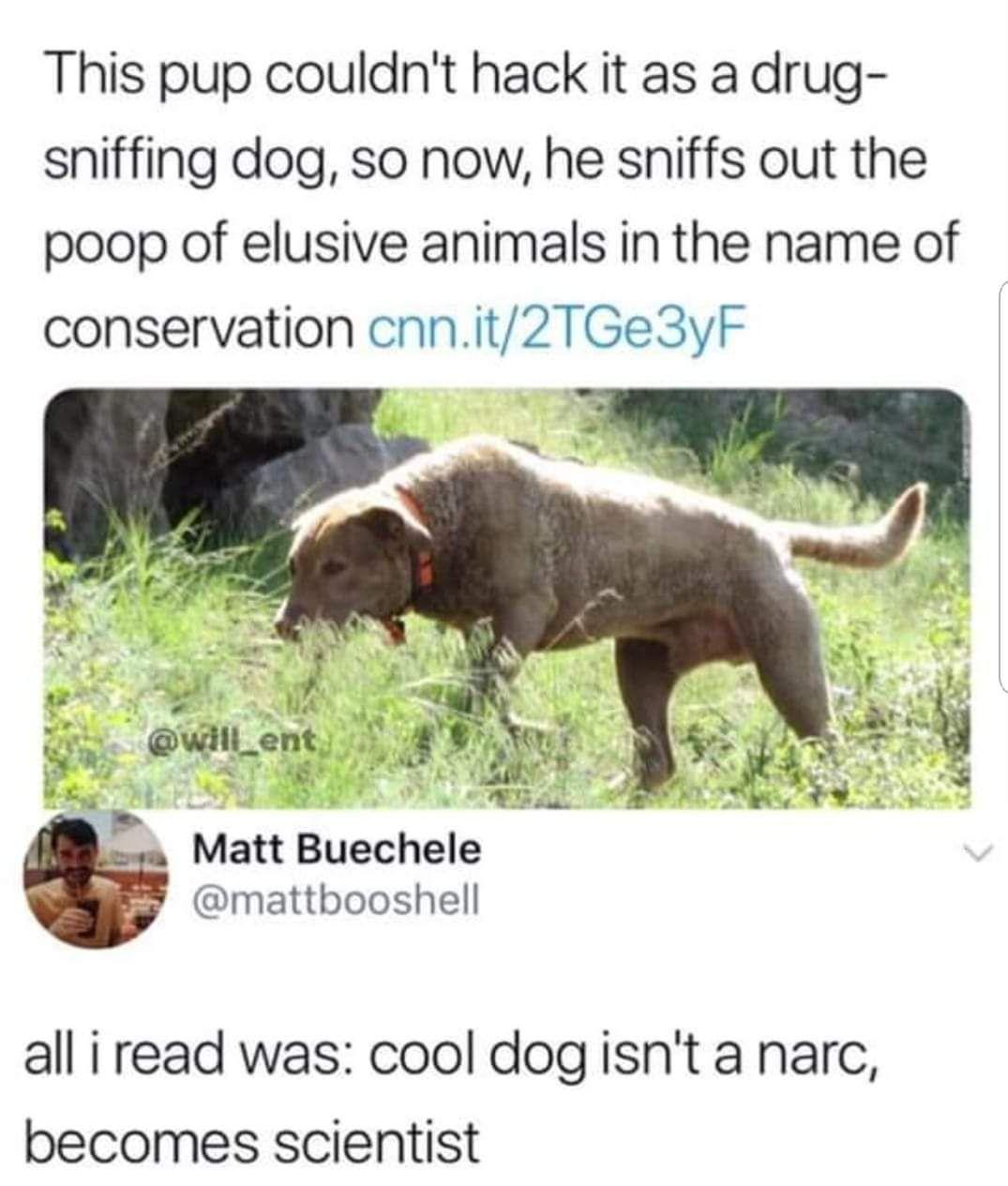 Good guy doggo