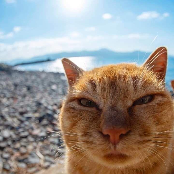 """""""i hates da sun, i hates da beach, i hates you too"""""""