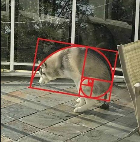 Mathematically perfect pupper