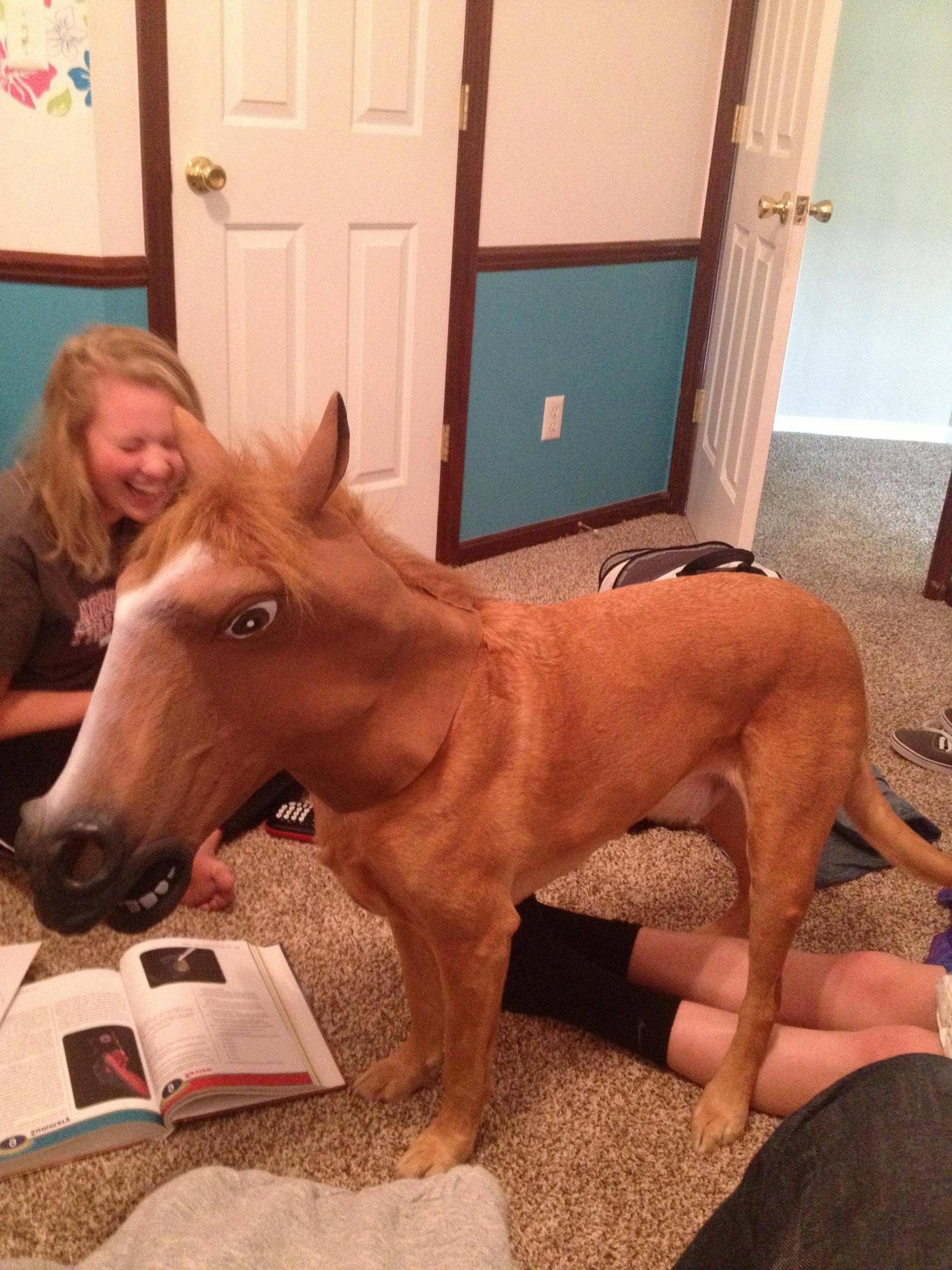 I put a horse mask on my dog